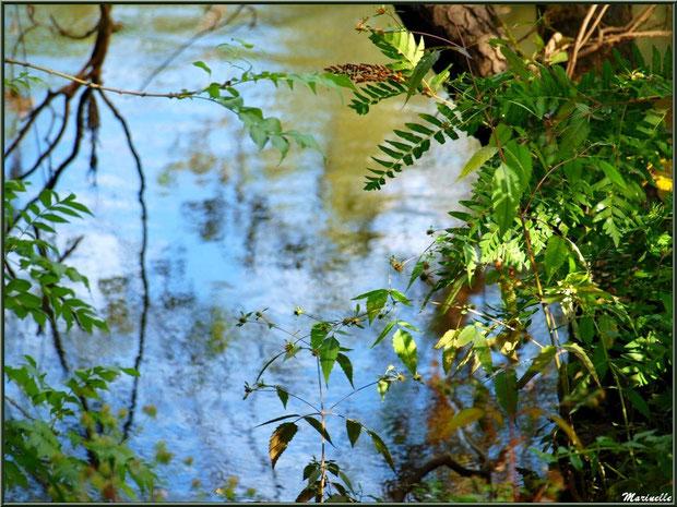 Reflets et verdoyance sur la rivière La Leyre (lieu-dit Lamothe, Le Teich, Bassin d'Arcachon)