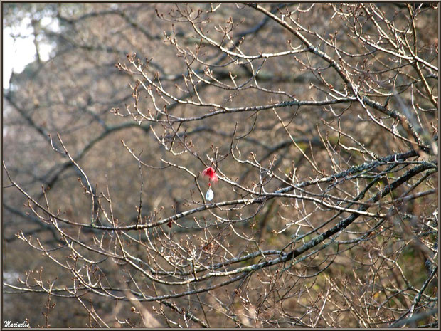 Hameçon accroché dans un arbre au-dessus du Canal des Landes au Parc de la Chêneraie à Gujan-Mestras (Bassin d'Arcachon)