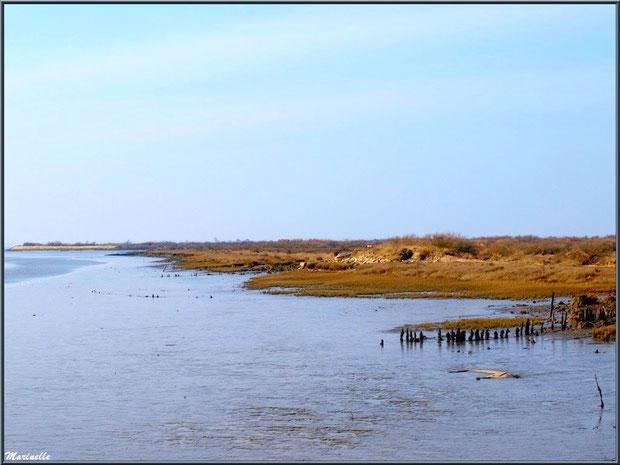 Chenal vers le Bassin, Sentier du Littoral, secteur Domaine de Certes et Graveyron, Bassin d'Arcachon (33)