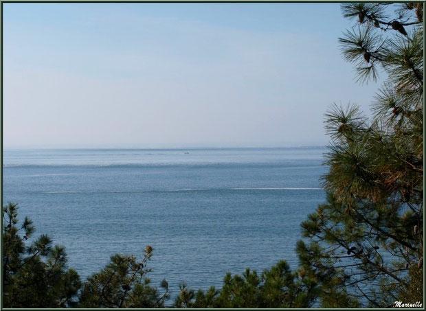 Vue sur le Bassin depuis les hauteurs de La Corniche à Pyla-sur-Mer, Bassin d'Arcachon (33)