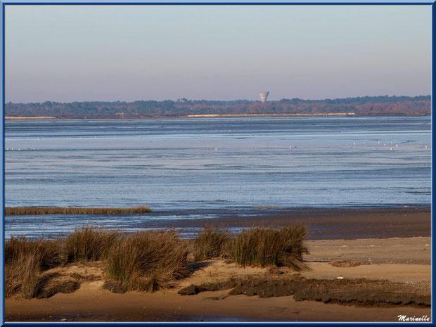 La plage hivernale avec ses oyats, le Bassin à marée basse et ses mouettes, Sentier du Littoral, secteur Moulin de Cantarrane, Bassin d'Arcachon
