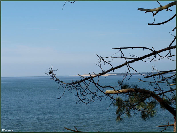 Le Bassin et, en toile de fond, La pointe du Cap Ferret vus depuis les hauteurs de La Corniche à Pyla-sur-Mer, Bassin d'Arcachon (33)