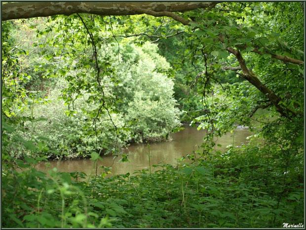 Et derrière la verdure coule La Leyre, Sentier du Littoral au lieu-dit Lamothe, Le Teich, Bassin d'Arcachon (33)