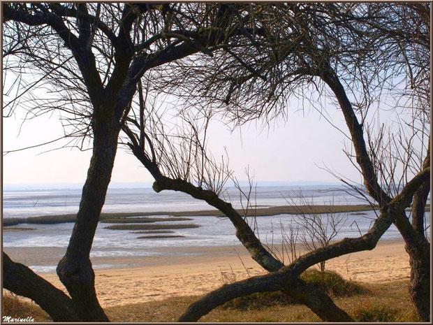 Bord de la plage avec le Bassin à marée basse et ses tamaris en tenue hivernale, Sentier du Littoral, secteur Domaine de Certes et Graveyron, Bassin d'Arcachon (33)