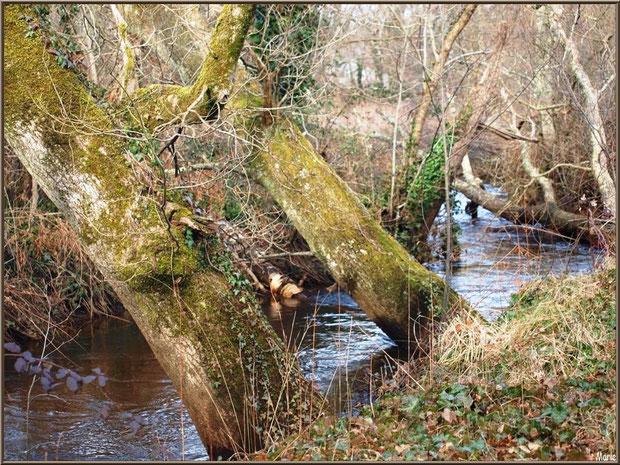 Le petit ruisseau longeant le sentier menant à la Fontaine Saint Jean à Lamothe, Commune du Teich, Bassin d'Arcachon