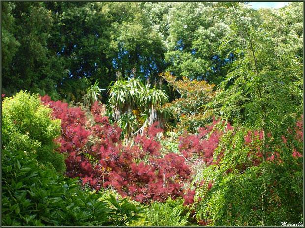 Entrée du sentier de la Vallée du Bas avec en touffe rouge un Cotinus coggygria ou Arbre à Perruques ou Fustet ou Barbe de Jupiter  - Les Jardins du Kerdalo à Trédarzec, Côtes d'Armor (22)