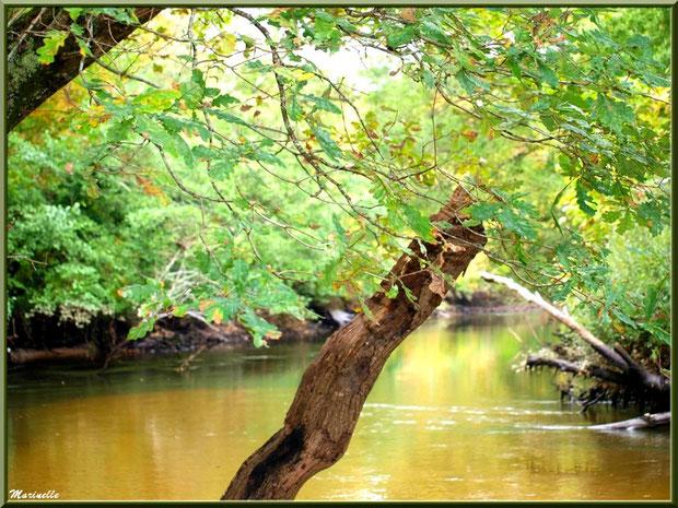 La Leyre et ses reflets d'automne, Sentier du Littoral au lieu-dit Lamothe, Le Teich, Bassin d'Arcachon (33)
