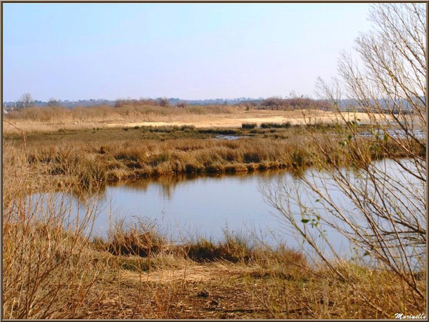 Marécage côté Bassin et la plage en fond, Sentier du Littoral, secteur Domaine de Certes et Graveyron, Bassin d'Arcachon (33)