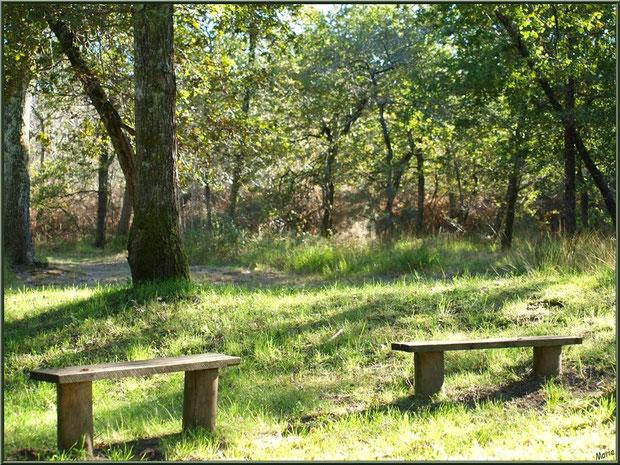 """La forêt servant d'écrin à la Fontaine Saint Jean à Lamothe, Commune du Teich (Bassin d'Arcachon) avec ses petits bancs pour les """"pèlerins"""""""