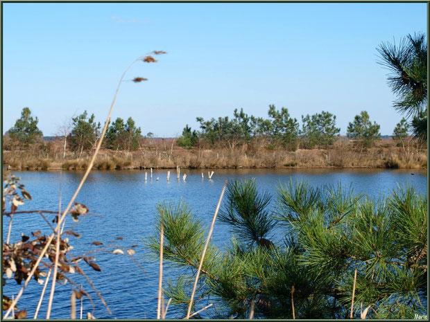 Végétation autour des réservoirs, en février, sur le Sentier du Littoral, secteur Moulin de Cantarrane, Bassin d'Arcachon