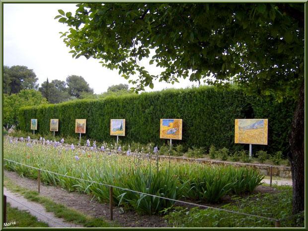 Le jardin aux iris et quelques oeuvres de Van Gogh à l'arrière du monastère de Saint Paul de Mausole à Saint Rémy de Provence (Alpilles - 13)