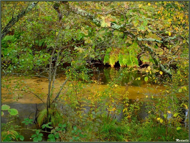 Végétation automnale et reflets sur le Canal des Landes au Parc de la Chêneraie à Gujan-Mestras (Bassin d'Arcachon)