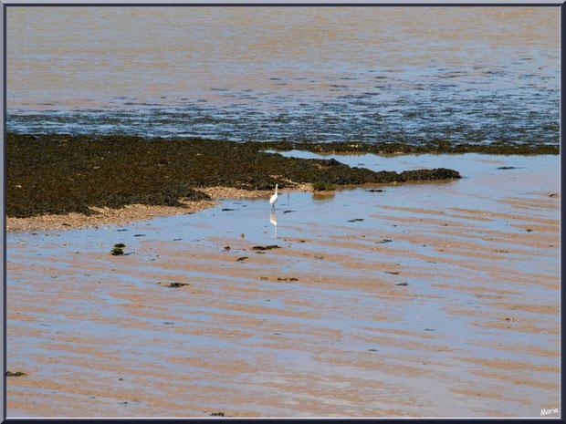 Aigrette en bordure de La Gironde à Talmont-sur-Gironde, Charente-Maritime