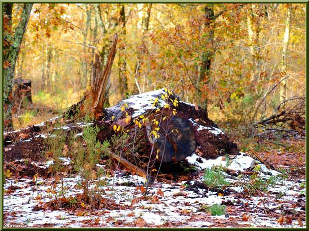 Reste de manteau neigeux, forêt sur le Bassin d'Arcachon (33)