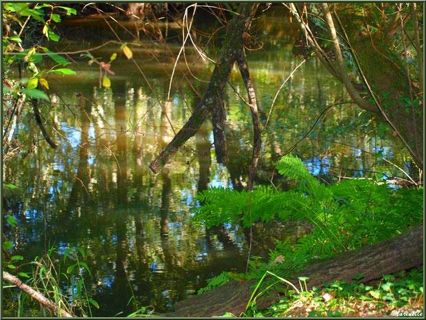 Végétation, bois et reflets, en début d'automne, en bordure de La Leyre, Sentier du Littoral au lieu-dit Lamothe, Le Teich, Bassin d'Arcachon (33)