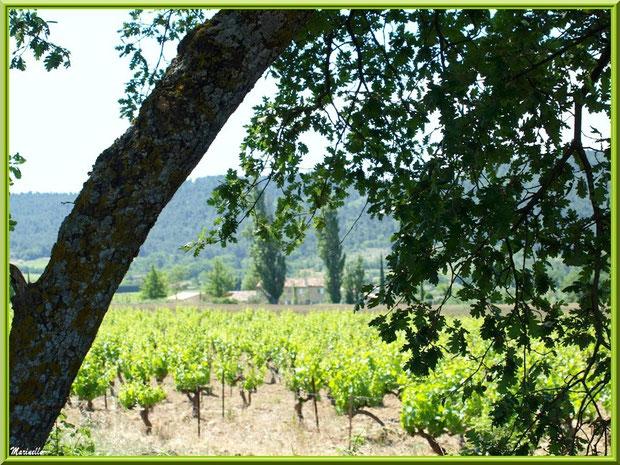 Vignoble dans la campagne environnante du village de Cucuron, Lubéron (84)