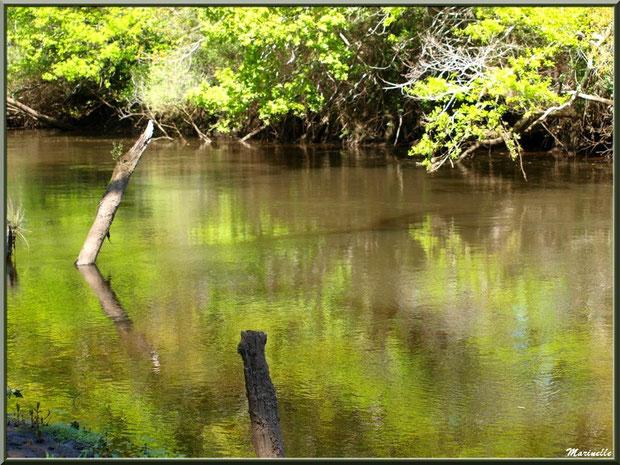 Bois, verdure et reflets sur La Leyre, Sentier du Littotal au lieu-dit Lamothe, Le Teich, Bassin d'Arcachon (33)