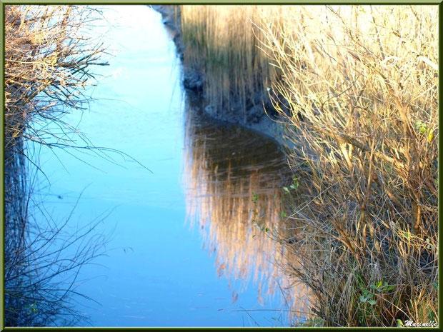 Méli-mélo végétal en bordure de La Leyre, Sentier du Littoral, secteur Port du Teich en longeant La Leyre, Le Teich, Bassin d'Arcachon (33)