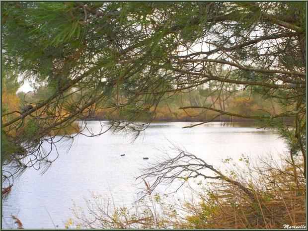Végétation hivernale autour d'un réservoir sur le Sentier du Littoral, secteur Moulin de Cantarrane, Bassin d'Arcachon