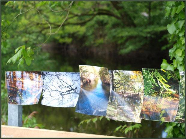 Quelques photos de Marinelle exposées à la Fête de la Nature 2013 au Parc de la Chêneraie à Gujan-Mestras (Bassin d'Arcachon)