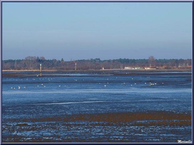 Le Bassin à marée basse aves ses mouettes et bernaches et, à l'horizon, le port d'Audenge, Sentier du Littoral, secteur Moulin de Cantarrane, Bassin d'Arcachon