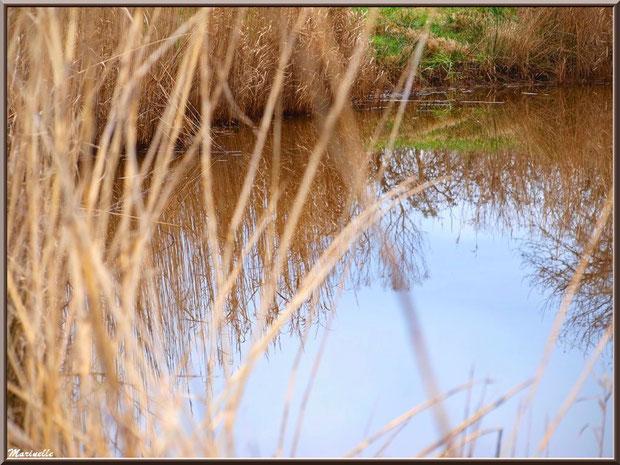 Roseaux et reflets sur un ruisseau en bordure des prés salés, Sentier du Littoral secteur Pont Neuf, Le Teich, Bassin d'Arcachon (33)