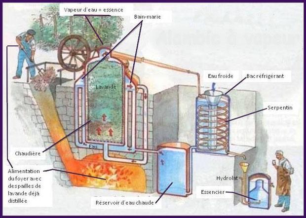 Extraction à la vapeur