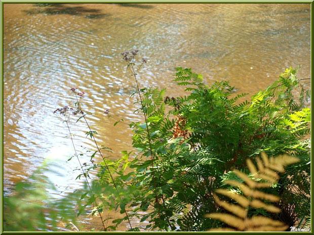 Eupatoires Chavrines et fougères en bordure du Canal des Landes au Parc de la Chêneraie à Gujan-Mestras (Bassin d'Arcachon)