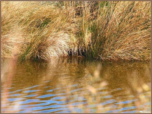 Reflets et flou dans un réservoir, Sentier du Littoral, secteur Domaine de Certes et Graveyron, Bassin d'Arcachon (33)