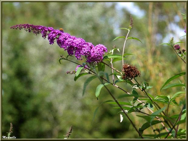 Arbre aux Papillons, Zoo du Bassin d'Arcachon, La Teste de Buch (33)