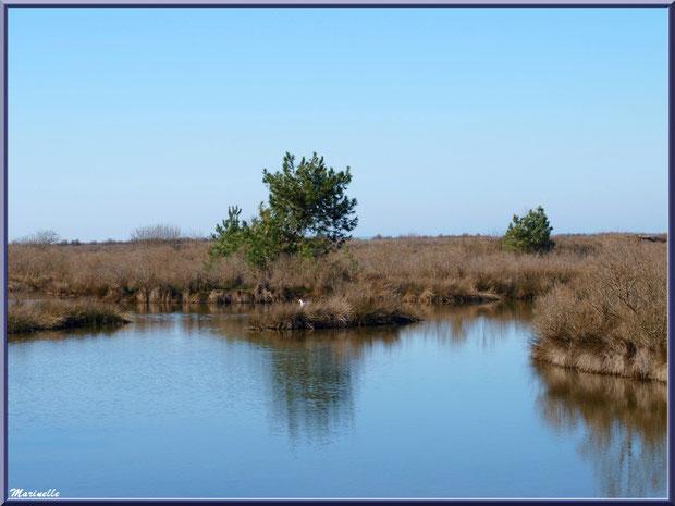 Végétation hivernale autour d'un réservoir, Sentier du Littoral, secteur Moulin de Cantarrane, Bassin d'Arcachon