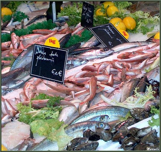 Marché de Provence, jeudi matin à Maussane-Les-Alpilles (13), étal de poissons de Méditerranée