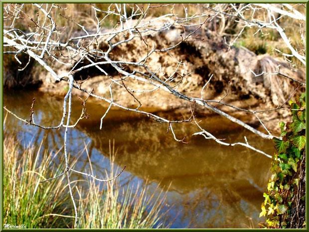 Branche de chêne, végétation et reflets sur le ruisseau bordant le sentier forestier, Sentier du Littoral secteur Pont Neuf, Le Teich, Bassin d'Arcachon (33)