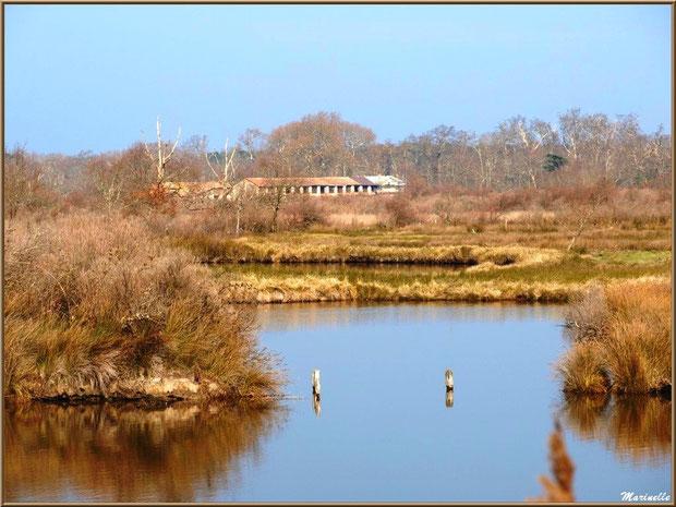 Un des réservoirs et ses reflets avec en fond les bâtisses de Graveyron, Sentier du Littoral, secteur Domaine de Certes et Graveyron, Bassin d'Arcachon (33)
