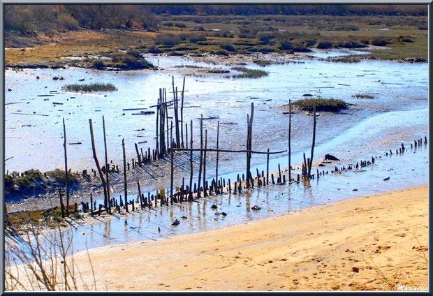 """Petit chenal, appelé """"estey"""",  et une bande de plage sur le Bassin, Sentier du Littoral, secteur Moulin de Cantarrane, Bassin d'Arcachon"""