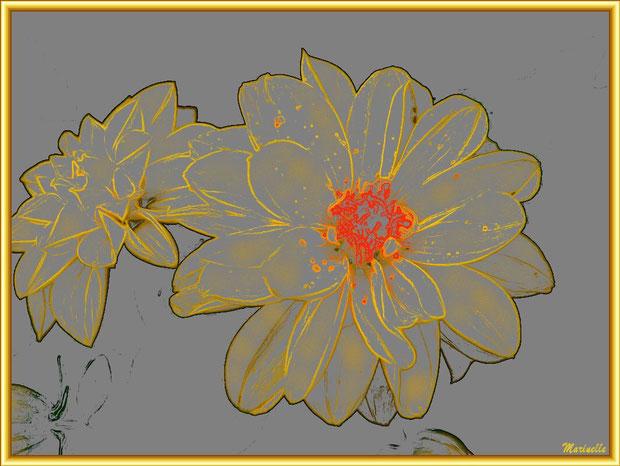 Dahlia jaune orangé