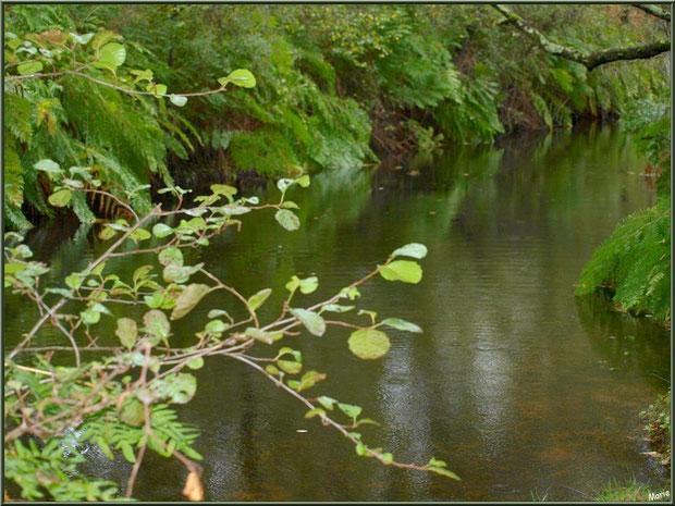 Végétation et reflets en bordure du Canal des Landes au Parc de la Chêneraie à Gujan-Mestras (Bassin d'Arcachon)