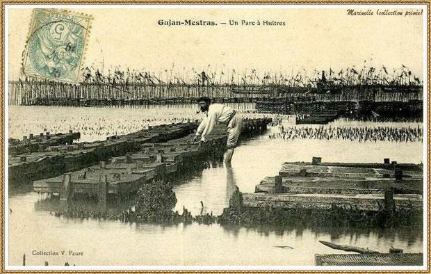 Gujan-Mestras autrefois : en 1916, ostréiculteur sur son parc à huîtres, Bassin d'Arcachon (carte postale, collection privée)