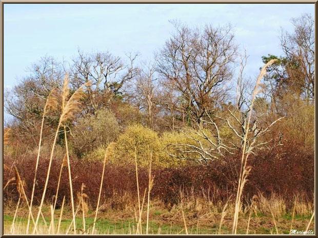 Végétation printanière dans les prés salés, Sentier du Littoral secteur Pont Neuf, Le Teich, Bassin d'Arcachon (33)