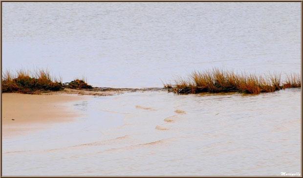 Entre plage et Bassin, Sentier du Littoral côté Bassin, secteur Moulin de Cantarrane, Bassin d'Arcachon