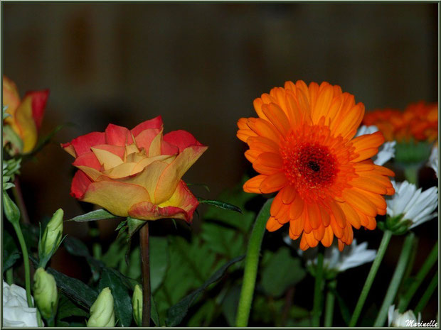 Lisanthus, Roses et Gerberas