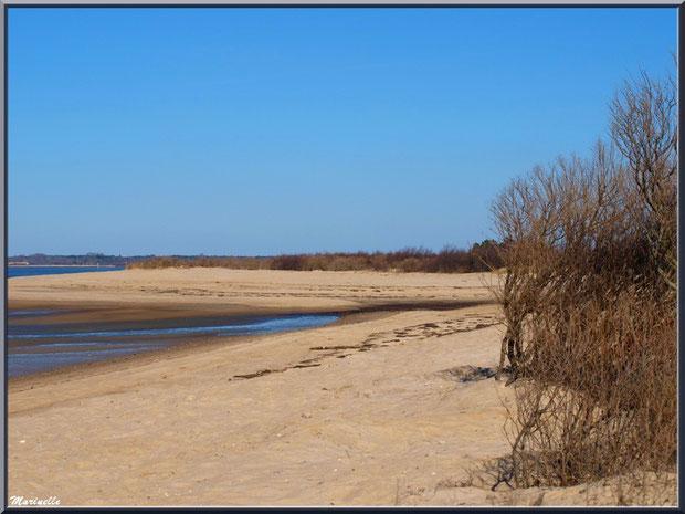 La plage hivernale avec ses tamaris et arbrisseaux, le Bassin, Sentier du Littoral, secteur Moulin de Cantarrane, Bassin d'Arcachon