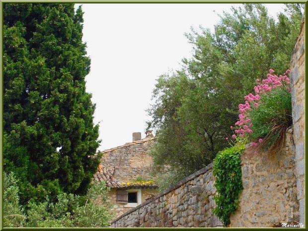 Ruelle, verdure et fleurs dans le village d'Oppède-le-Vieux, Lubéron (84)