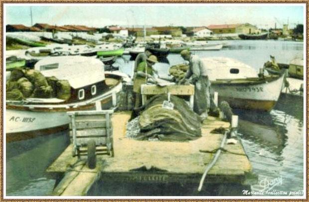 Gujan-Mestras autrefois : Pinasses et triage des huîtres sur un chaland dans la darse principale du Port de Larros, Bassin d'Arcachon (carte postale, collection privée)