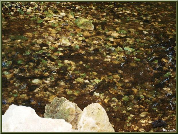 Une multitude de pierres colorées font, par endroits, le lit de La Leyre, Sentier du Littoral au lieu-dit Lamothe, Le Teich, Bassin d'Arcachon (33)