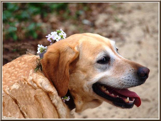Tina l'élégante et son collier fleuri