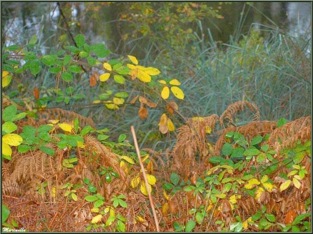 Végétation automnale en bordure du Canal des Landes au Parc de la Chêneraie à Gujan-Mestras (Bassin d'Arcachon), après ondée