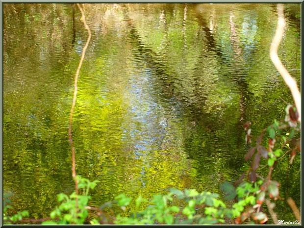 Reflets sur La Leyre, Sentier du Littoral au lieu-dit Lamothe, Le Teich, Bassin d'Arcachon (33)