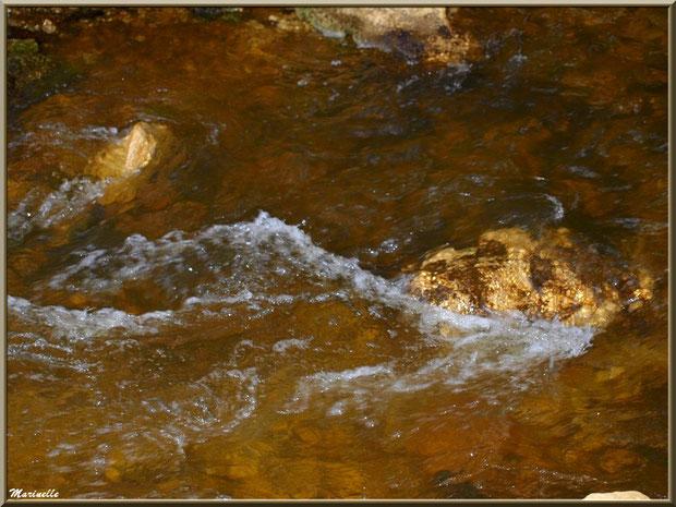 Telles des pépites d'or au creux de La Leyre, Sentier du Littoral au lieu-dit Lamothe, Le Teich, Bassin d'Arcachon (33)