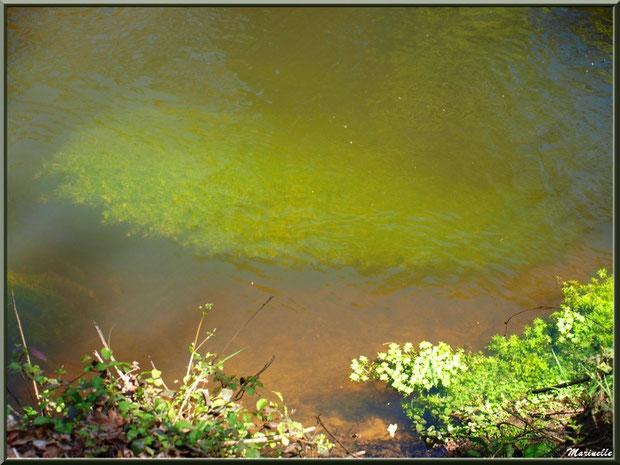 Herbacées, mousses aquatiques et reflets sur La Leyre, Sentier du Littoral au lieu-dit Lamothe, Le Teich, Bassin d'Arcachon (33)